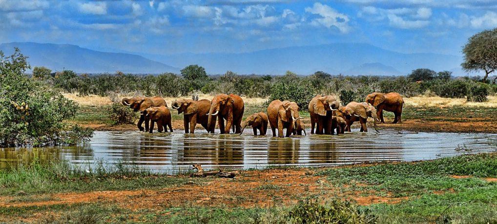 Tips til biludlejning og kørsel i Afrika